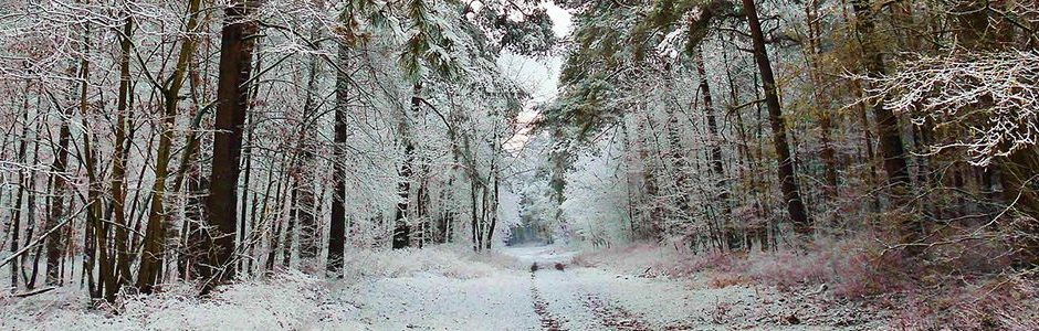 Winter Scene Forest - Keeping Fit This Christmas